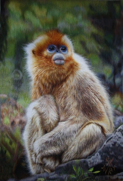 Wang Lihua. Golden Snub-Nosed Monkey. Silk. 20 x 13 inches