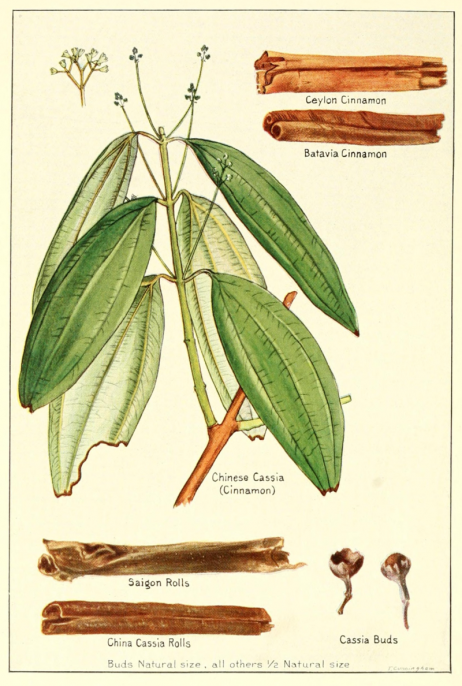 Describes cinnamon, cassia according to geographical locations: Ceylon, Batavia, China, Saigon. From pices, their nature and growth, the vanilla bean, a talk on tea (1915). Courtesy McCormick and company/Wikimedia Commons.