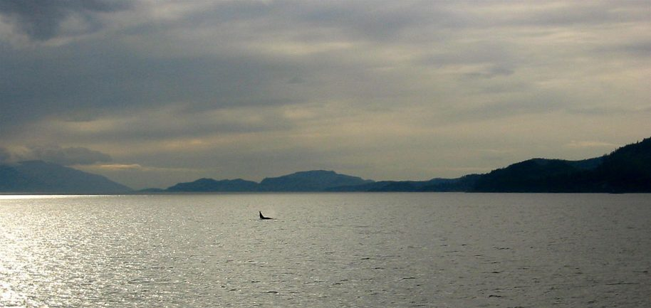 The dorsal fin of a male orca off the bow of the Spirit Of Endeavour in British Columbia. © Jeremy Keith/Wikimedia Commons.