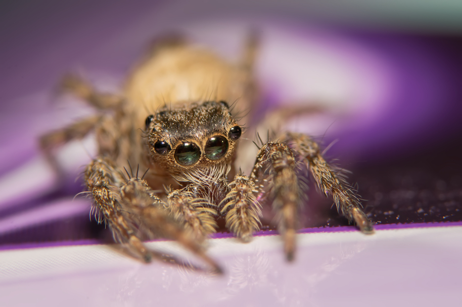 adorable spider