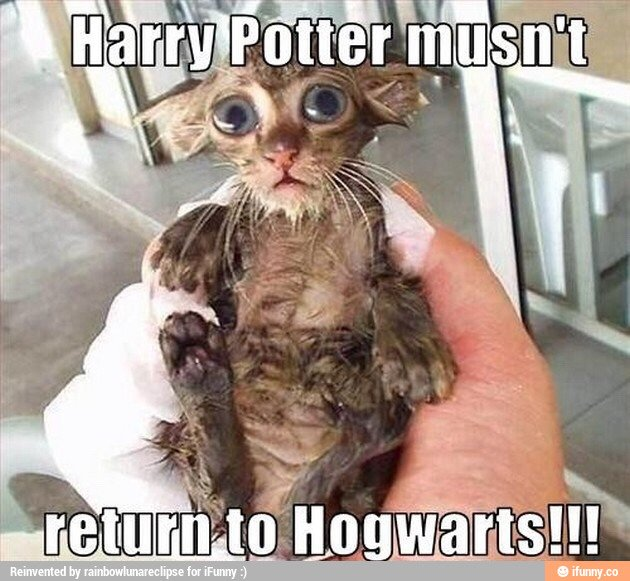Harry Potter cat meme