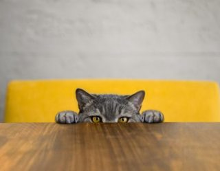 Marvelous Question: Is Your Cat a Flerken or Just Another A-Hole?