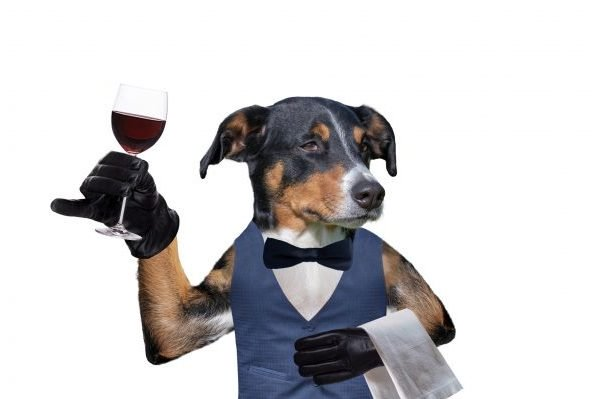 Heroic Dog Delivers Curbside Wine During Coronavirus Lockdown