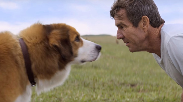 'A Dog's Purpose' (2017)