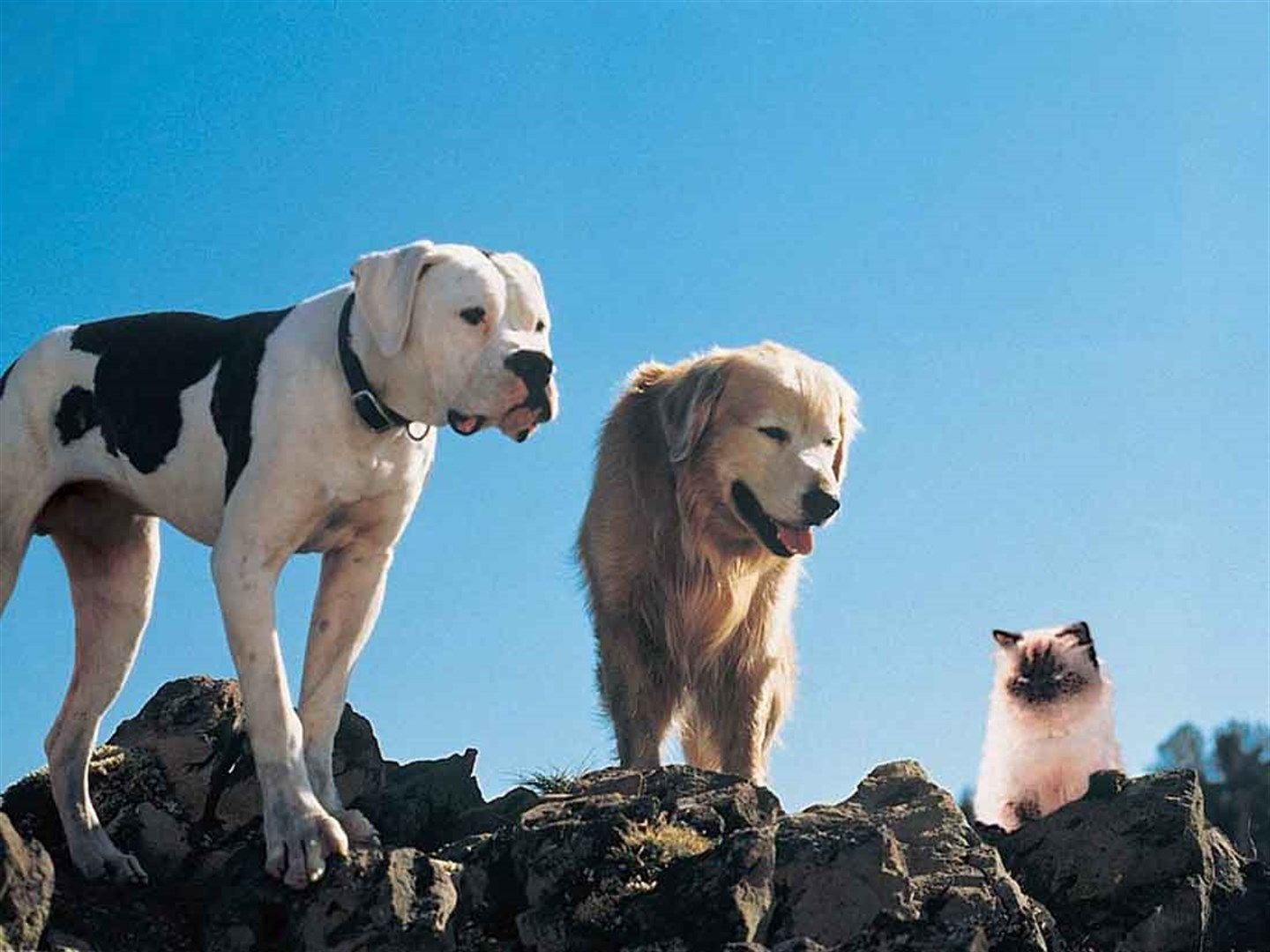 'Homeward Bound' (1993)