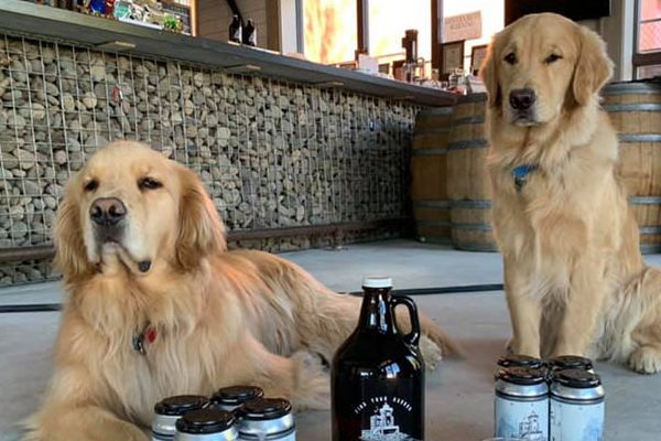 Mandatory Good News: Two Very Good Dogs Deliver Beer Curbside to Save Their Mom's Company