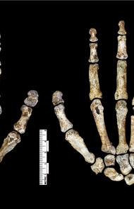 Scientists Announce New Details About the Mysterious Homo Naledi